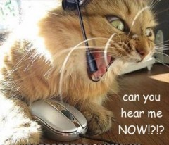 cat customer service.jpg